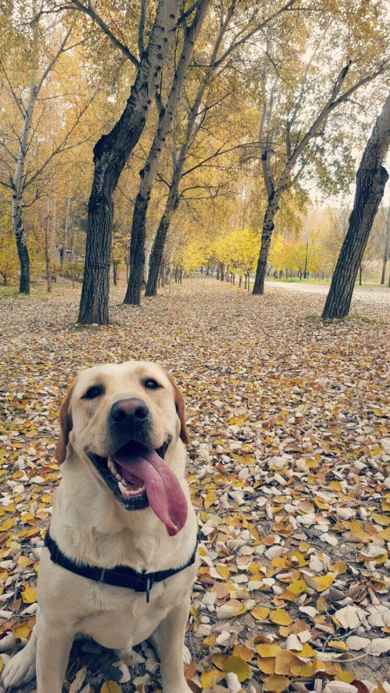 Pasear con tu perro. De obligación a afición