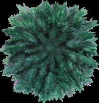 tree-52